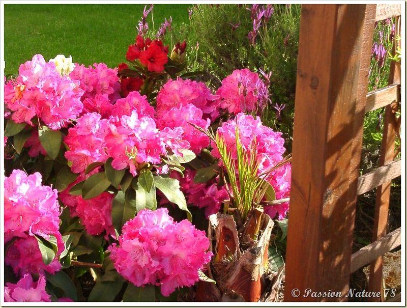 Le jardin de PassionNature78 (11)