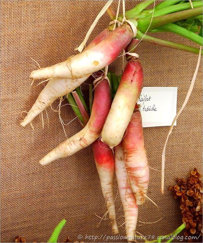 Les légumes d'autrefois (28)