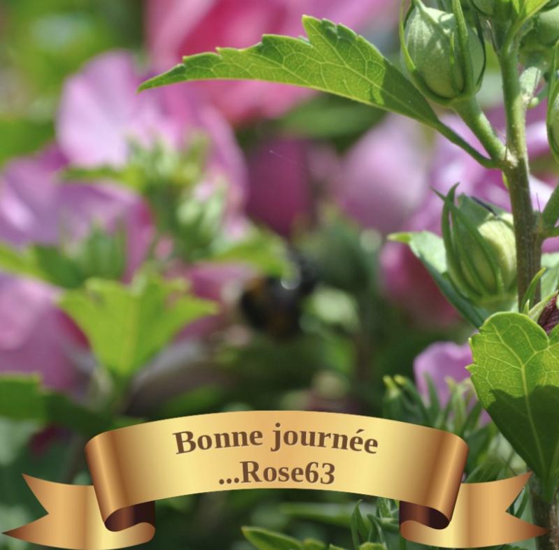 juilbonnejournéeRose63