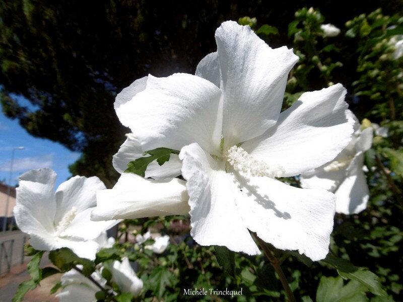 Fleurs de Léon 170818