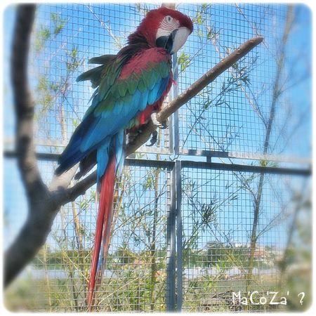 perroquet ara sur branche