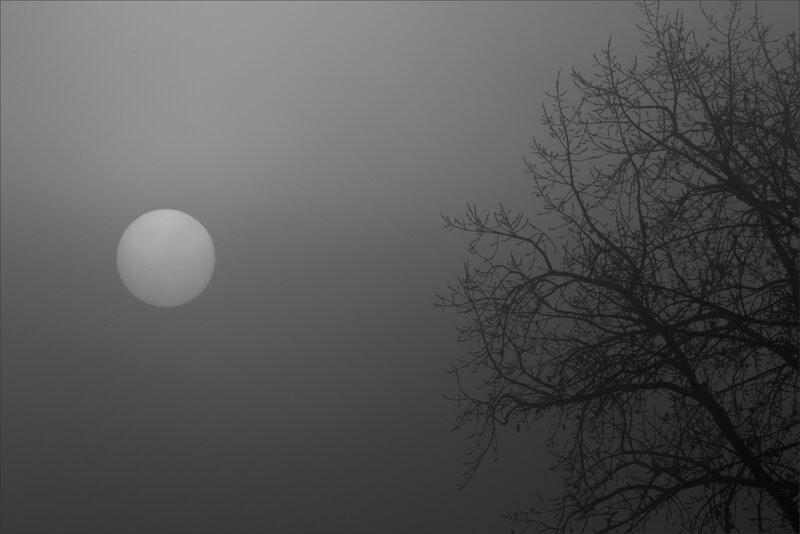 Brouillard soleil branches 291117