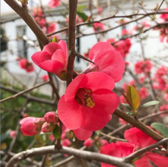 Maison et floraison ©Kid Friendly