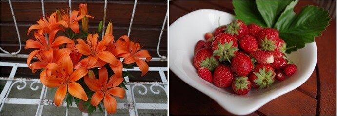 lys-fraises