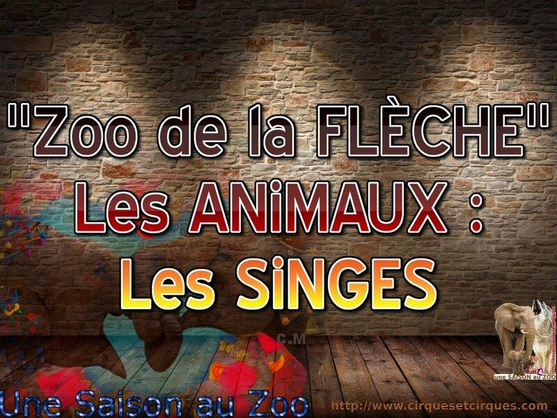 - ZOO de la FLECHE Les ANiMAUX les SiNGES