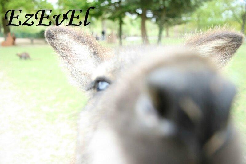 jardin kangourous EzEvEl 8