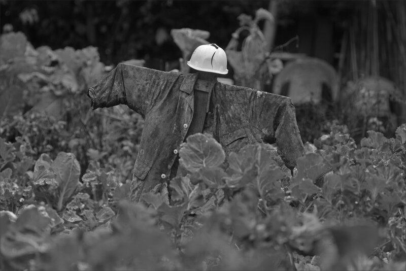 potager jardin epouvantail choux 291118