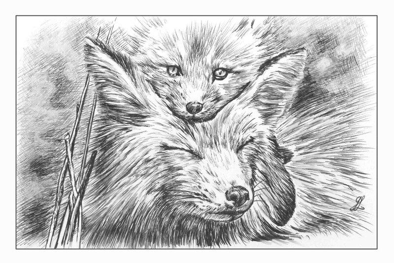 Renarde et son renardeau - Prédateurs - Dessin stylo bille Ghislaine Letourneur