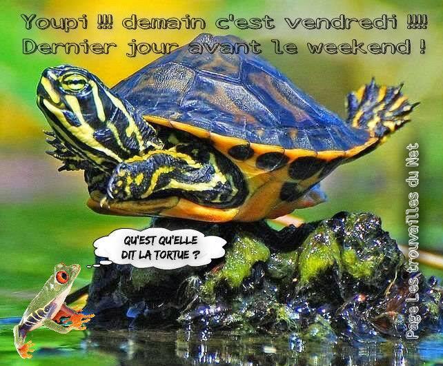 5 b v grenouille et tortueBPat 19