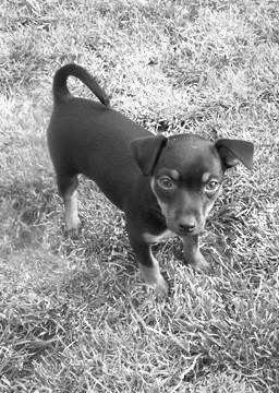 chien 4ratier-pragois-399478