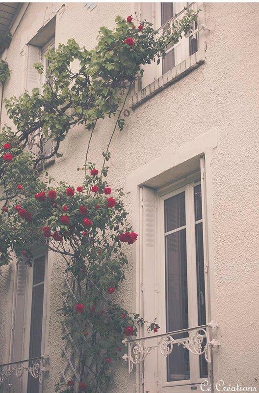 fleurs_jardin-17