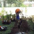 5ème jour: plantations