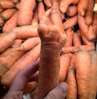 2018 11 21_patte carotte a 3 doigts