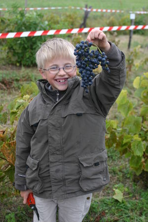 les_vendanges___la_chapelle_5_octobre_2008_035