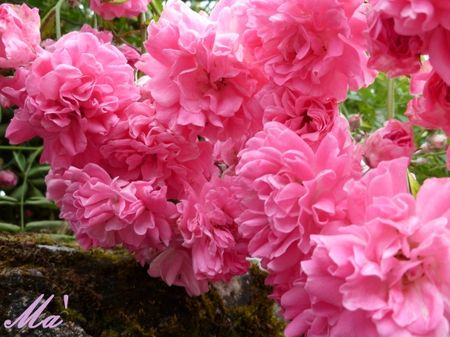 rose_100620_4