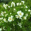 Fleurs & Plantes (2009-2011)