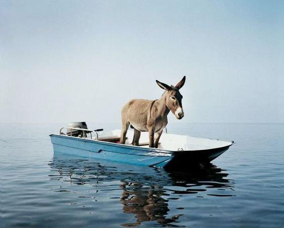 L'ane à pêche