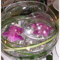 2009-09-27 table bulles5