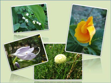 Fleurs 2009-2010 (16)