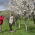 Laurent dans les arbres en fleurs