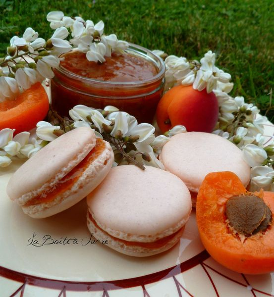 Macarons abricot acacia 2