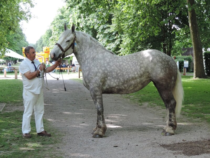 Duchesse de la Côte - 4 Juin 2017 - Concours d'élevage local - Rue (80) - 2e (Non Suitées)