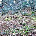La forêt d'Issaux en janvier...