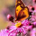 Chenille ou papillon?
