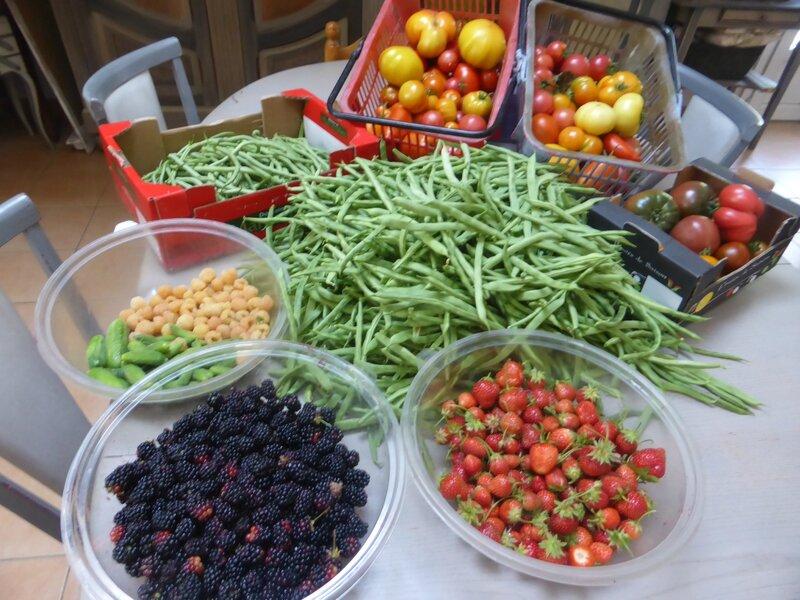 17-récolte du jour (2)