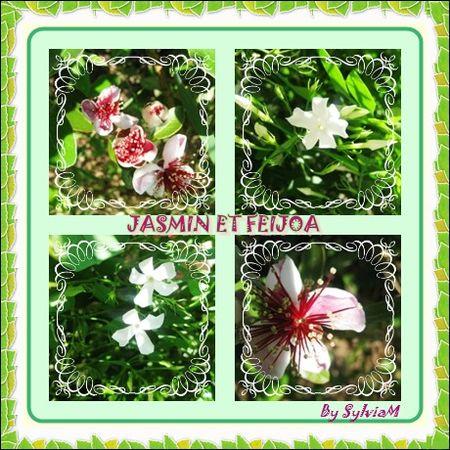 jasmin_et_feijoa