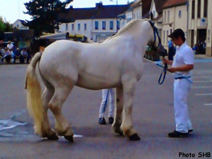 Bérengère 4 - Concours Elevage local - Hucqueliers (62) - 21 juin 2014 - photo SHB