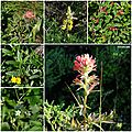 Presidio Flora San Francisco