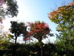 Japon_Kyoto_2009_035