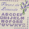 ABC Fleurs de lavande3