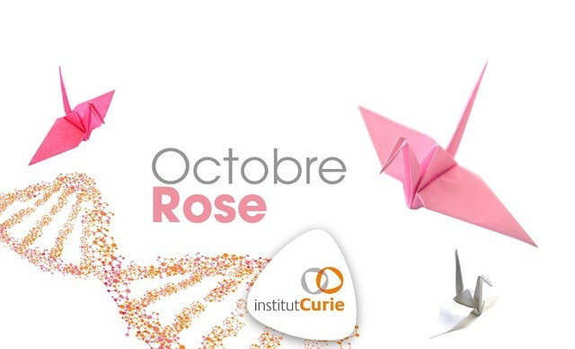 ob_f32f68_fb-grue-oct-rose