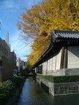 2006_11_24_Kyoto_Koyo__10__rs