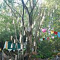 grappes blanches sur arbre mort