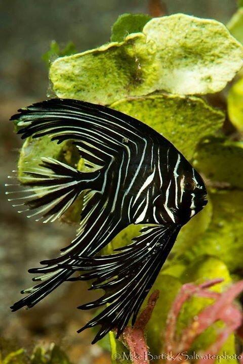 68494a3ece69c1a8e8fd976c7f1942d8__photo_credit_freshwater_fish