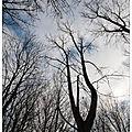 Chaud et froid au pied de l'arbre ...