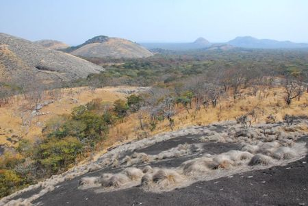 Zambie (539)