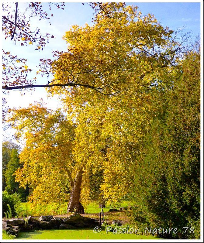 Arboretum de Chèvreloup (17)