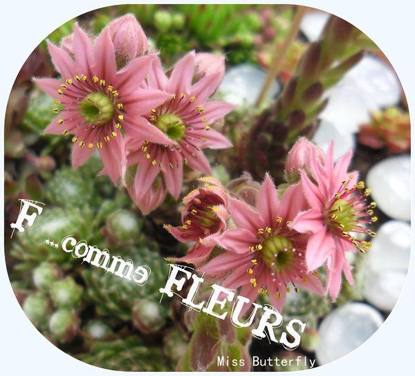 F comme Fleurs