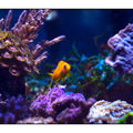 anthias03030802