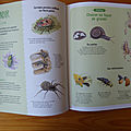 Entomologie junior
