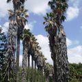 j3 parc palmiers