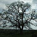 Chêne remarquable de la bigotie monpazier 24540