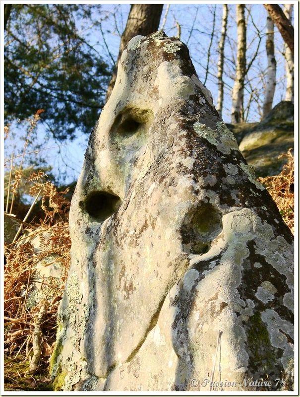 Les créatures des Vaux de Cernay (28)