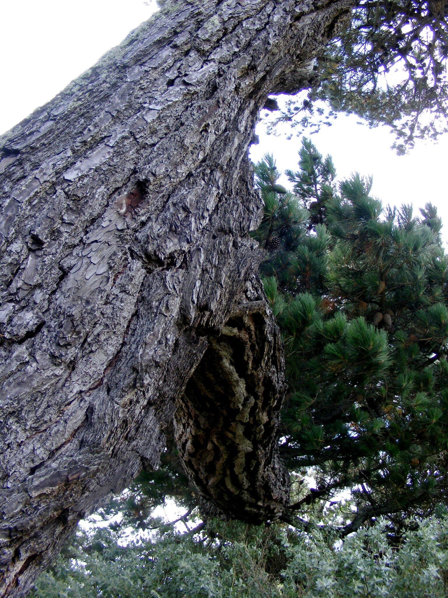 arbre crocodile2