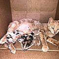 maman et 4 chatons sécurisés dans un garage
