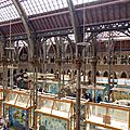 Pitt rivers museum. oxford.